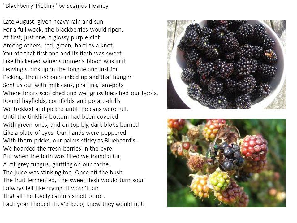 blackberry picking seamus heaney analysis