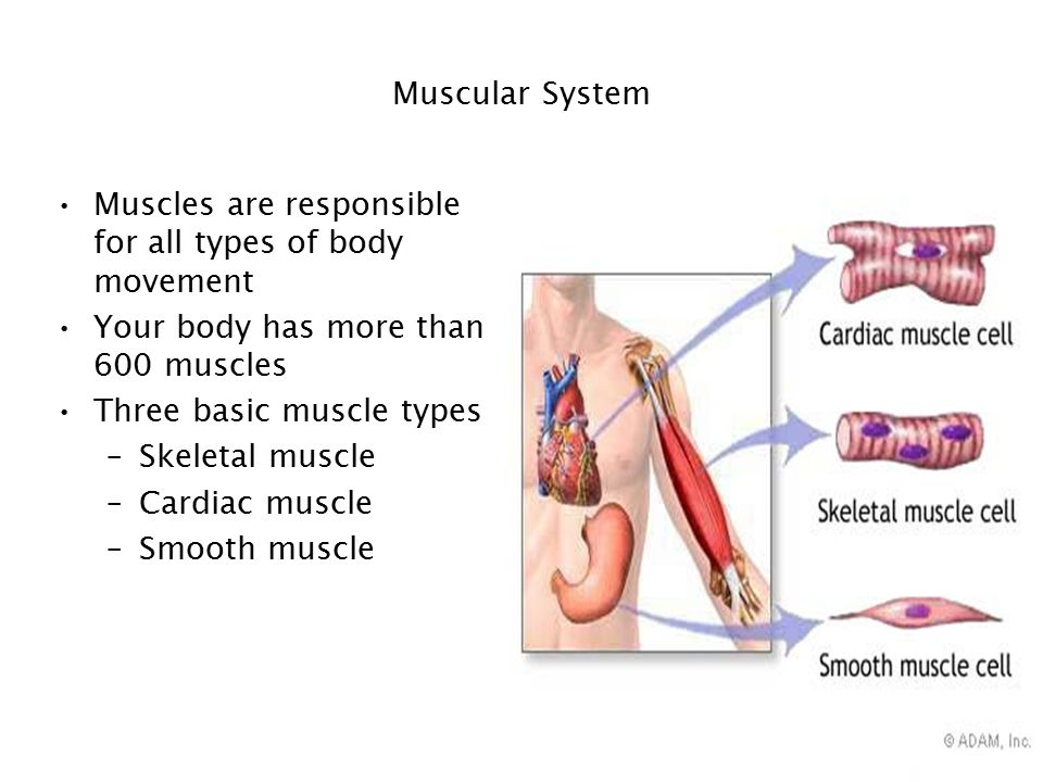 types of body movements pdf