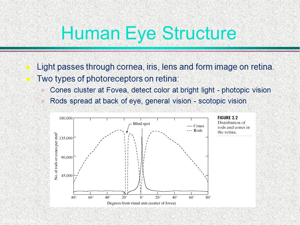 Human Visual System. - ppt video online download