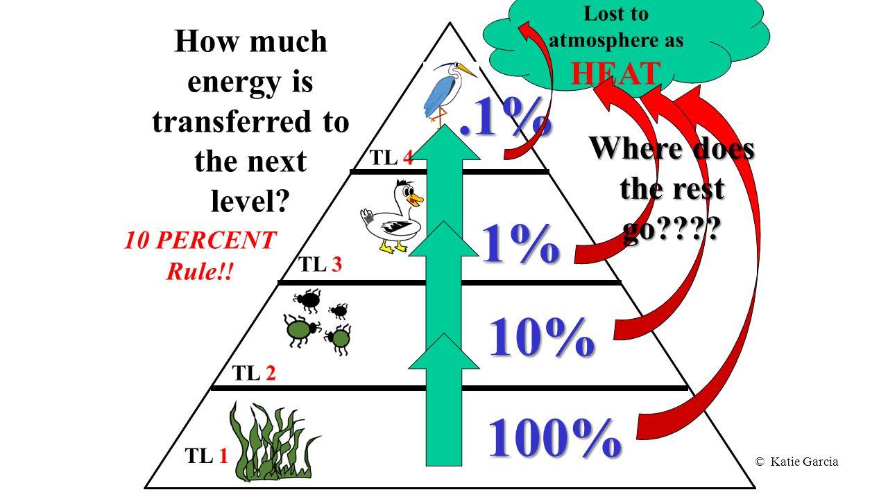 Energy Pyramid Percentages © Katie Garcia. -...