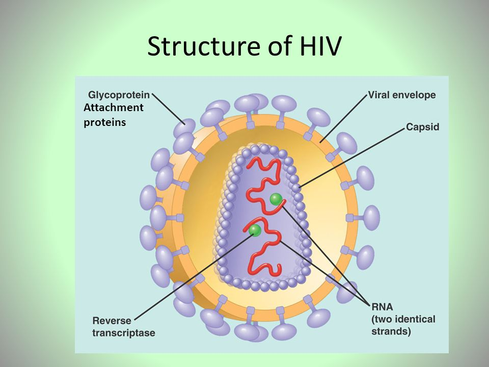 HIV. - ppt video online download