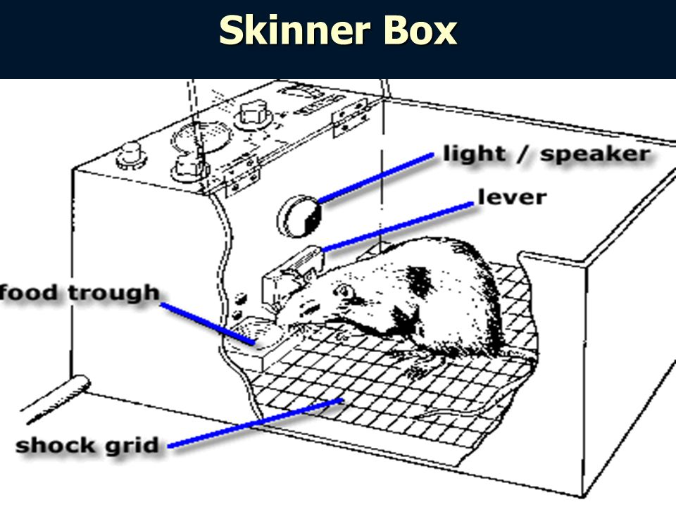5 Skinner Box  sc 1 st  SlidePlayer & Chapter 8 pt. 2: Operant Conditioning and Observational Learning ... Aboutintivar.Com