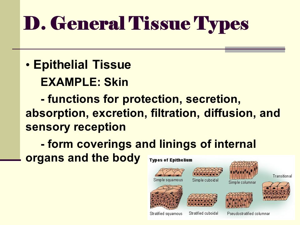 general function of epithelial tissue Tissue structure and function—general review 1 describe five general characteristics of epithelial tissue _____ 4 how are epithelial tissues classified.