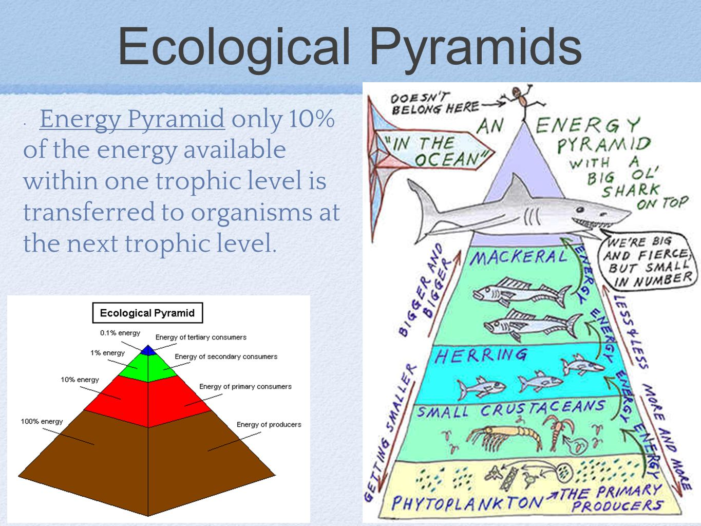 Ecological Pyramids Energy Pyramid only 10% of the energy available within one trophic level is transferred to organisms at the next trophic level.