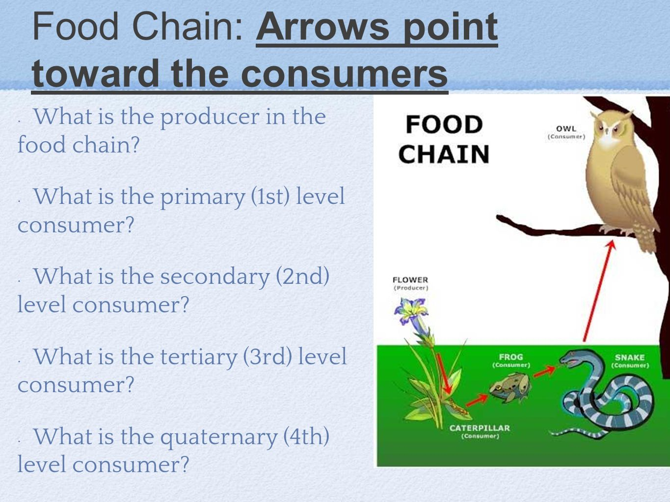 Food Chain: Arrows point toward the consumers