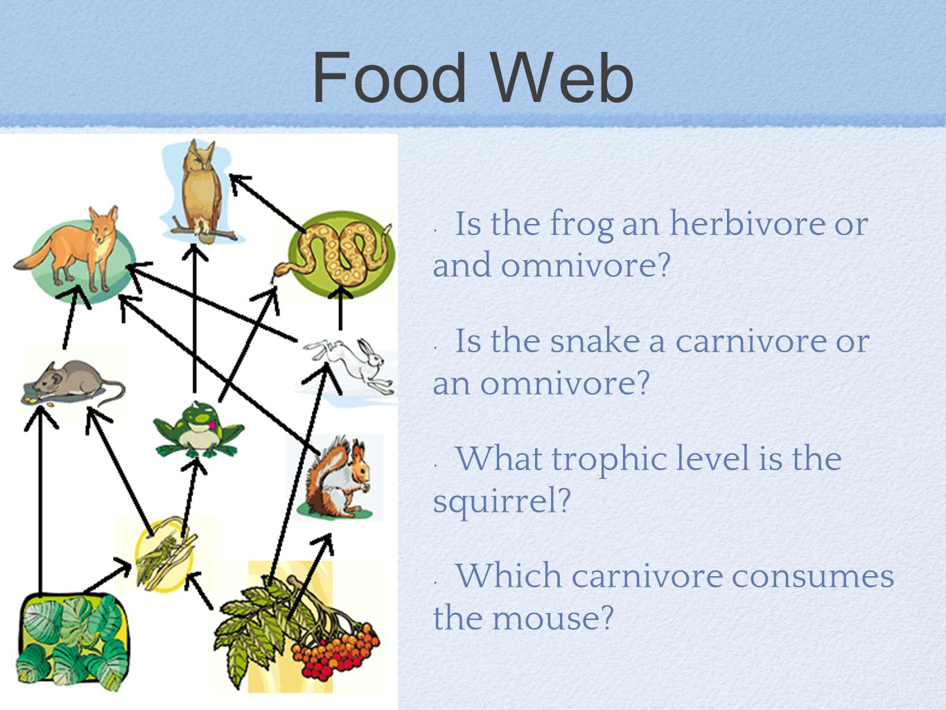 Food Web Is the frog an herbivore or and omnivore