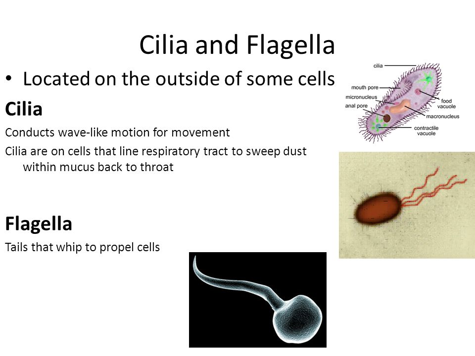 Structures and Functions of Eukaryotic Cells - ppt video ...