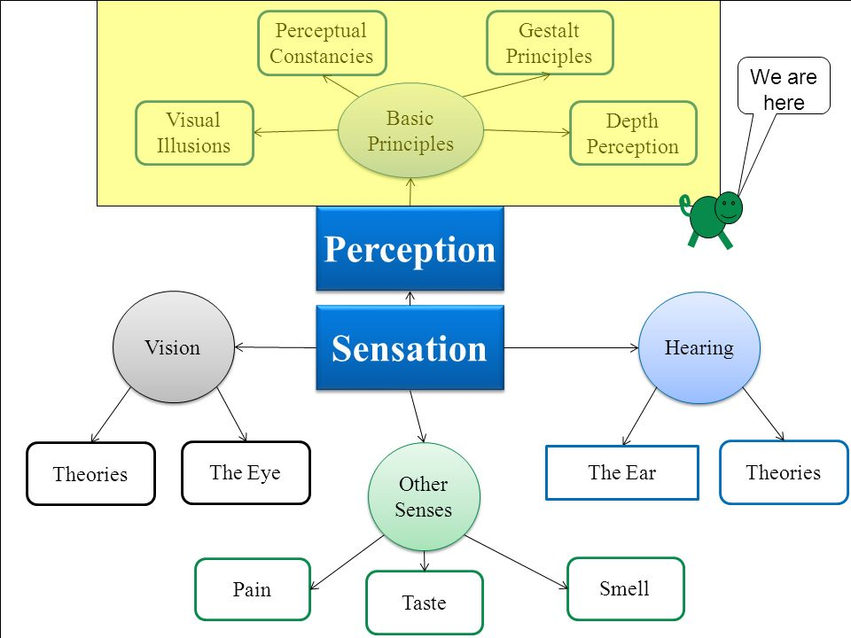 sensation perception and consciousness Since the earliest days of psycho-physiology, there has been a debate about the link among sensation, perception, attention, and consciousness the main question is: what happens to a sensory signal in the brain when it reaches a conscious stage of processing as opposed to being processed preattentively and outside.
