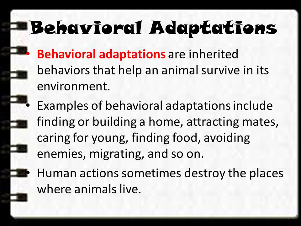 Lesson 1. What are Adaptations? - ppt download