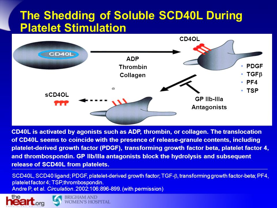 The Shedding of Soluble SCD40L During Platelet Stimulation