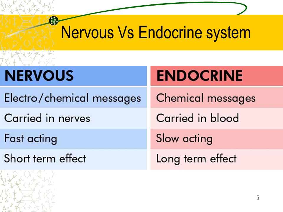 endocrine vs nervous system essays The endocrine and nervous system have a lot in common, but also are different in many ways both systems rely on releasing chemicals into the body.