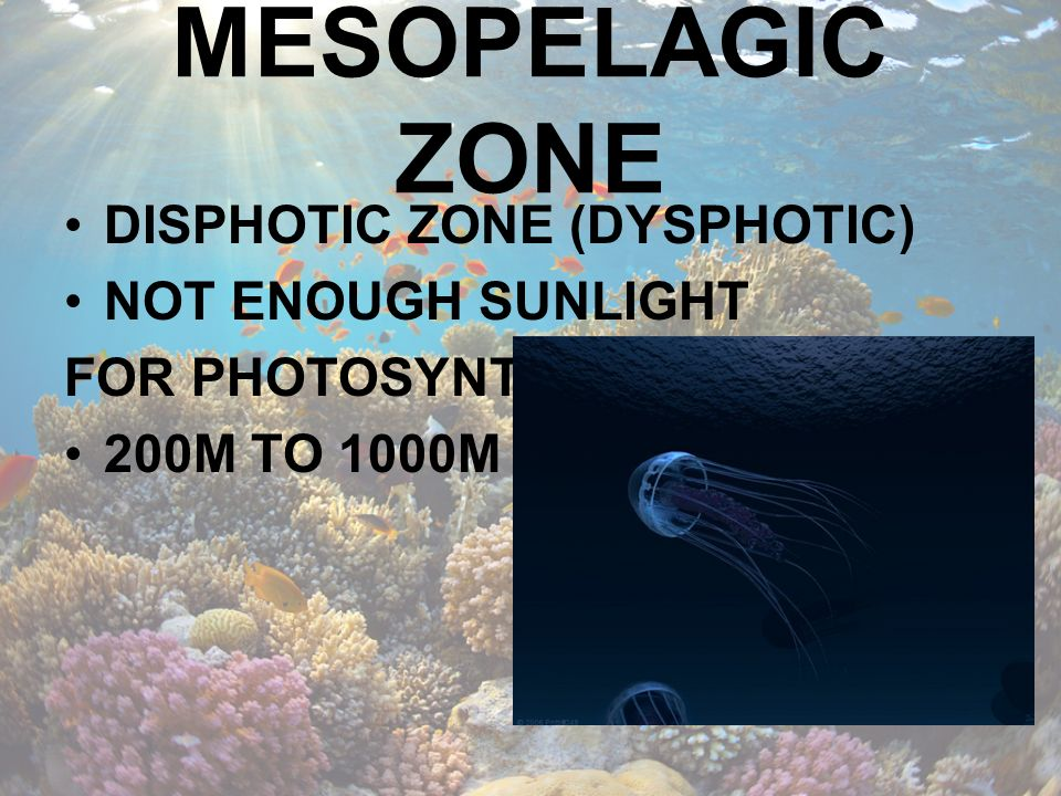 MESOPELAGIC ZONE DISPHOTIC ZONE (DYSPHOTIC) NOT ENOUGH SUNLIGHT