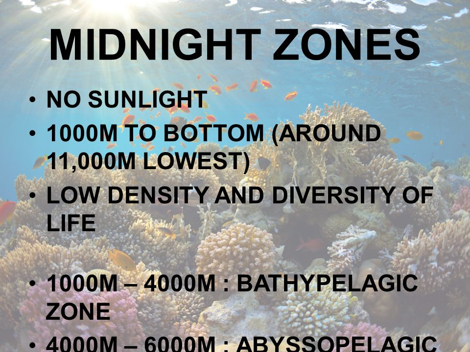 MIDNIGHT ZONES NO SUNLIGHT 1000M TO BOTTOM (AROUND 11,000M LOWEST)