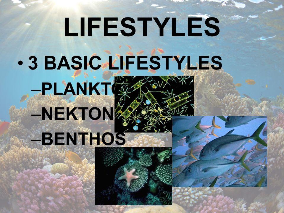 LIFESTYLES 3 BASIC LIFESTYLES PLANKTON NEKTON BENTHOS