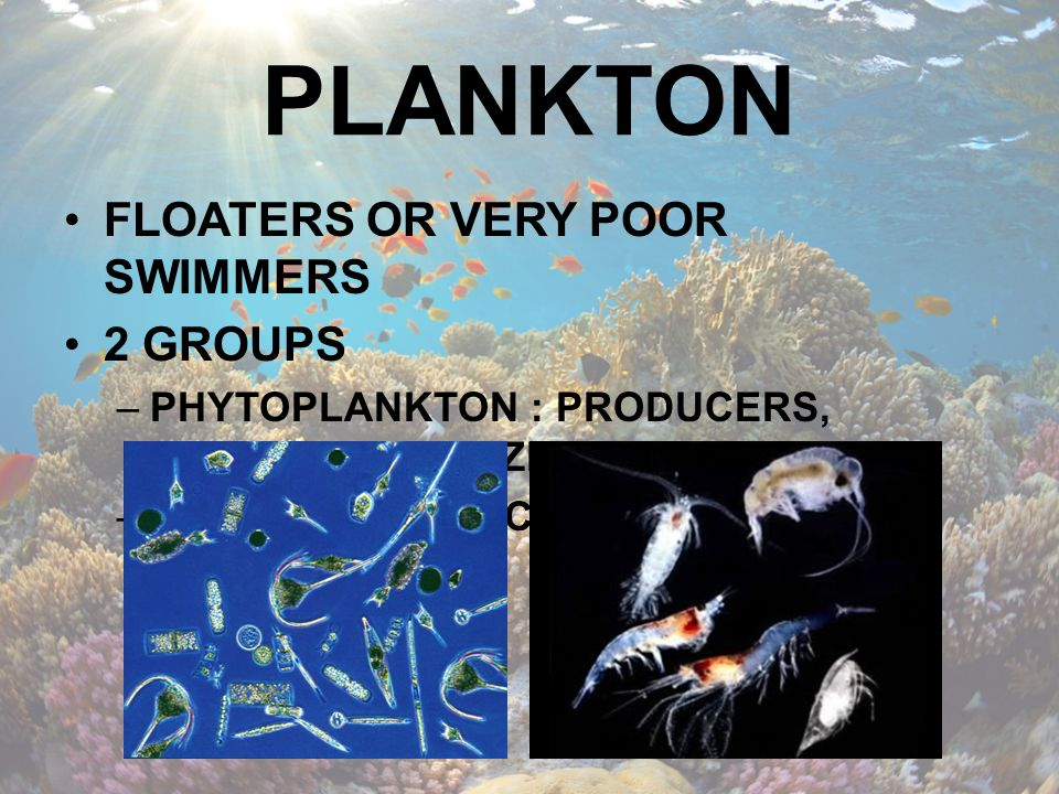 PLANKTON FLOATERS OR VERY POOR SWIMMERS 2 GROUPS