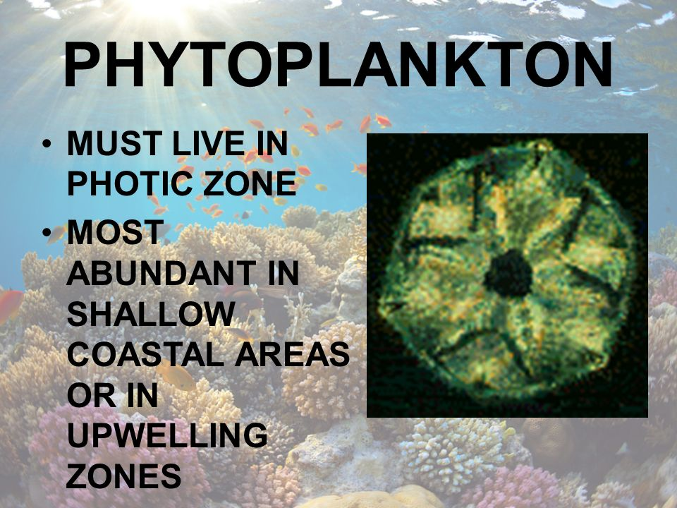 PHYTOPLANKTON MUST LIVE IN PHOTIC ZONE