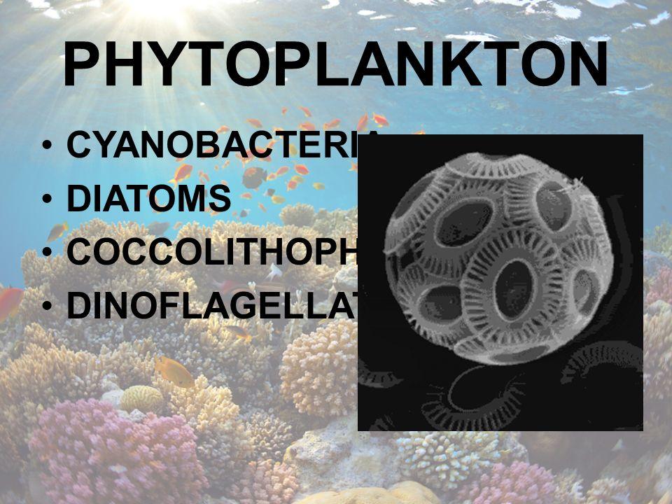PHYTOPLANKTON CYANOBACTERIA DIATOMS COCCOLITHOPHORES DINOFLAGELLATES