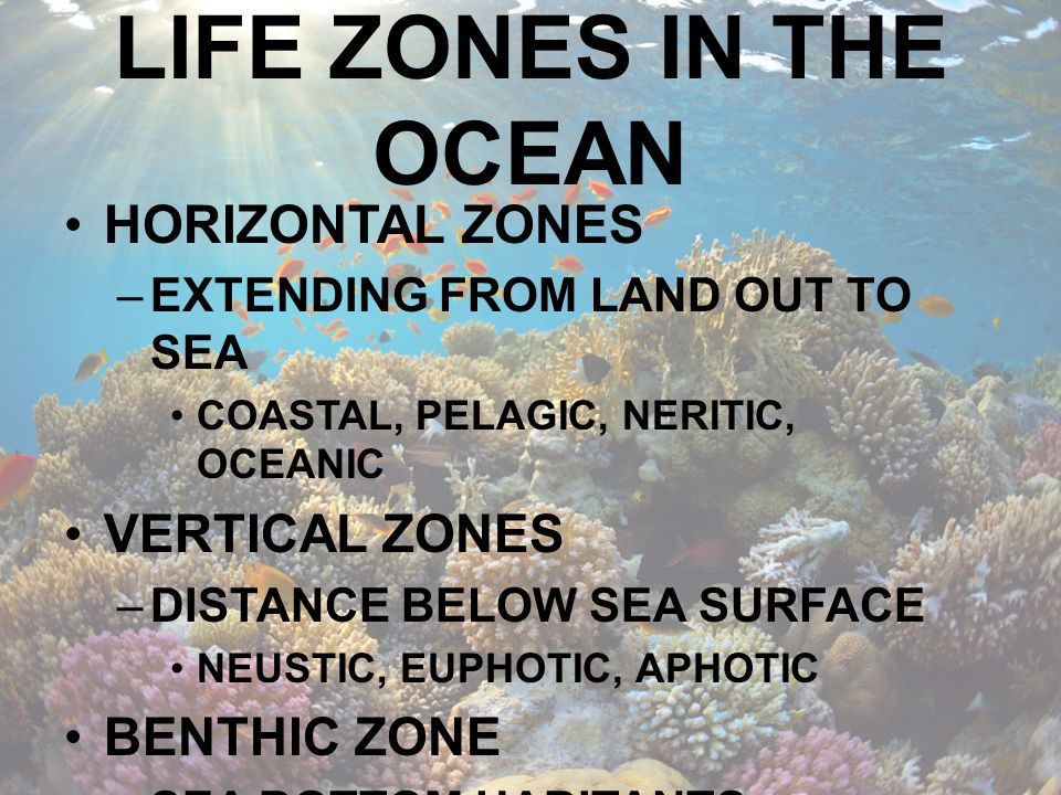 LIFE ZONES IN THE OCEAN HORIZONTAL ZONES VERTICAL ZONES BENTHIC ZONE