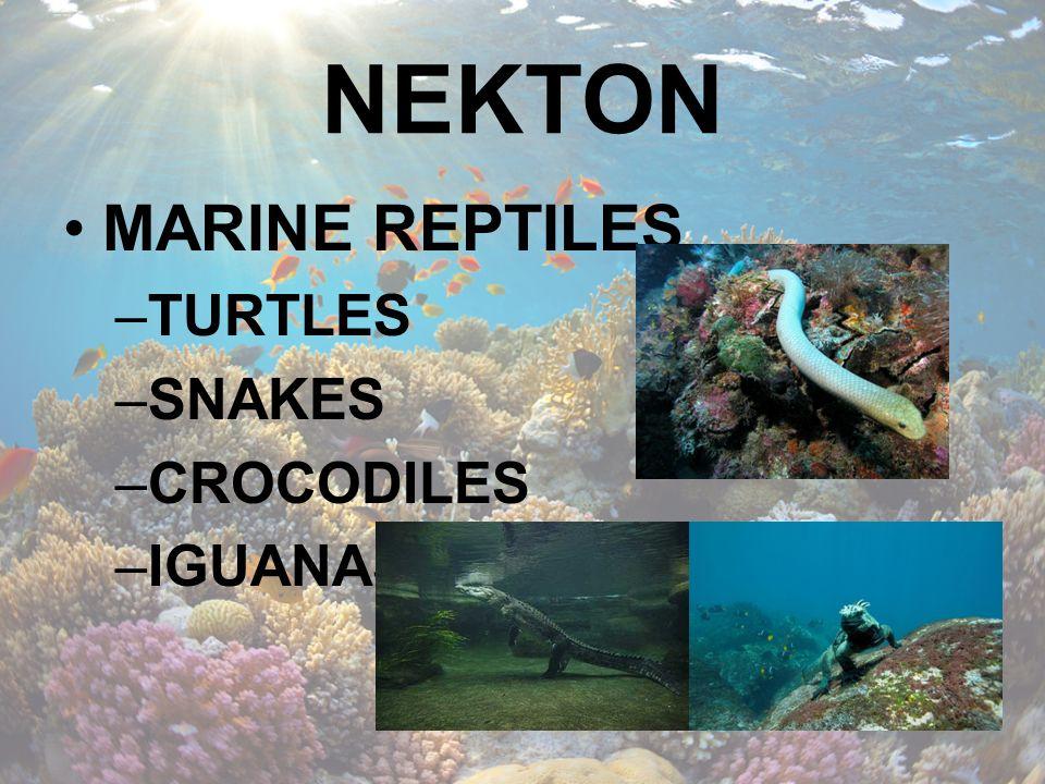 NEKTON MARINE REPTILES TURTLES SNAKES CROCODILES IGUANAS