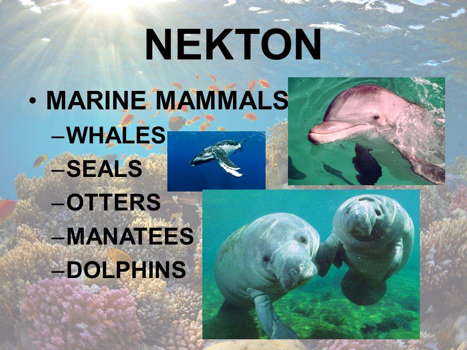 NEKTON MARINE MAMMALS WHALES SEALS OTTERS MANATEES DOLPHINS