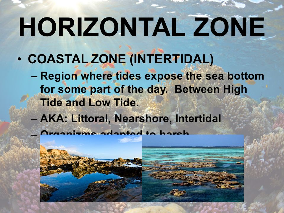 HORIZONTAL ZONE COASTAL ZONE (INTERTIDAL)