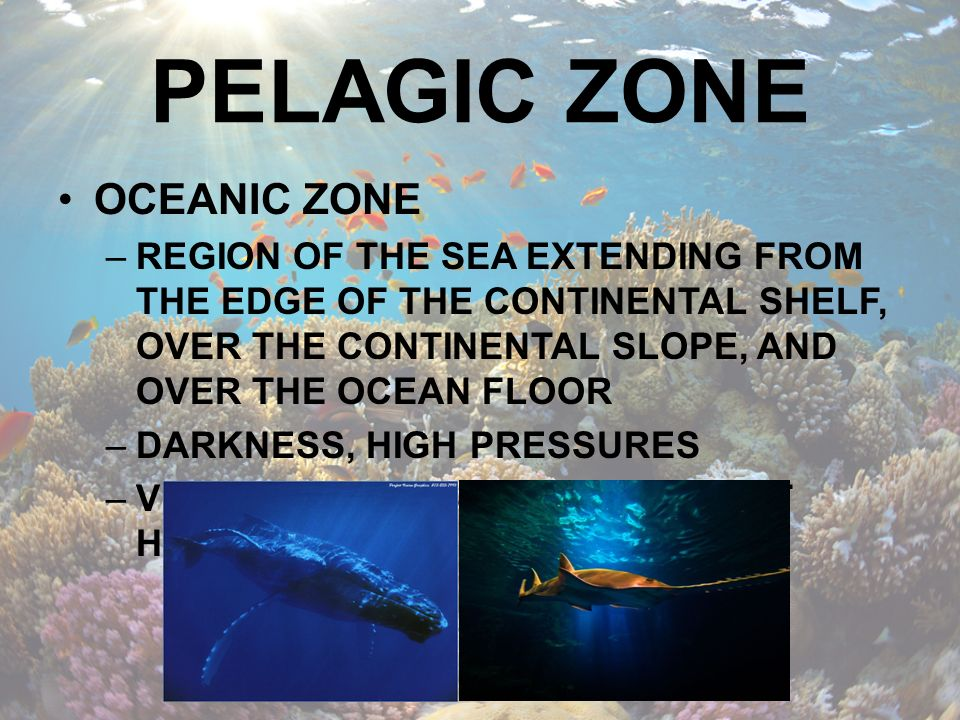 PELAGIC ZONE OCEANIC ZONE