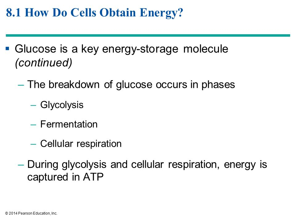Harvesting Energy: Glycolysis and Cellular Respiration - ppt video ...