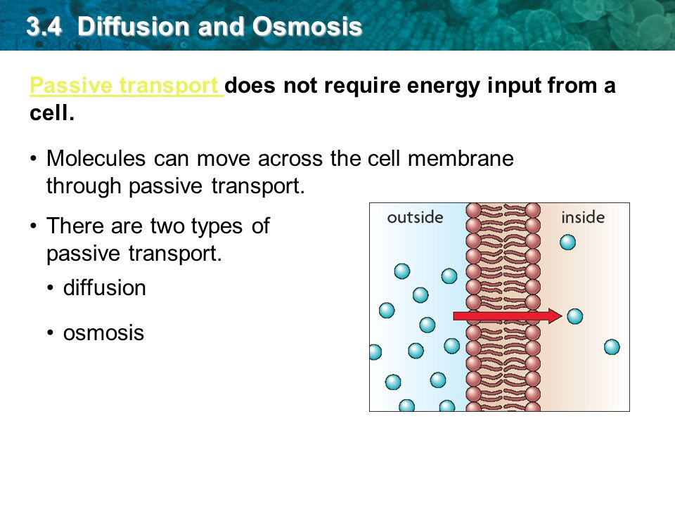 what is the relationship between passive transport diffusion and osmosis