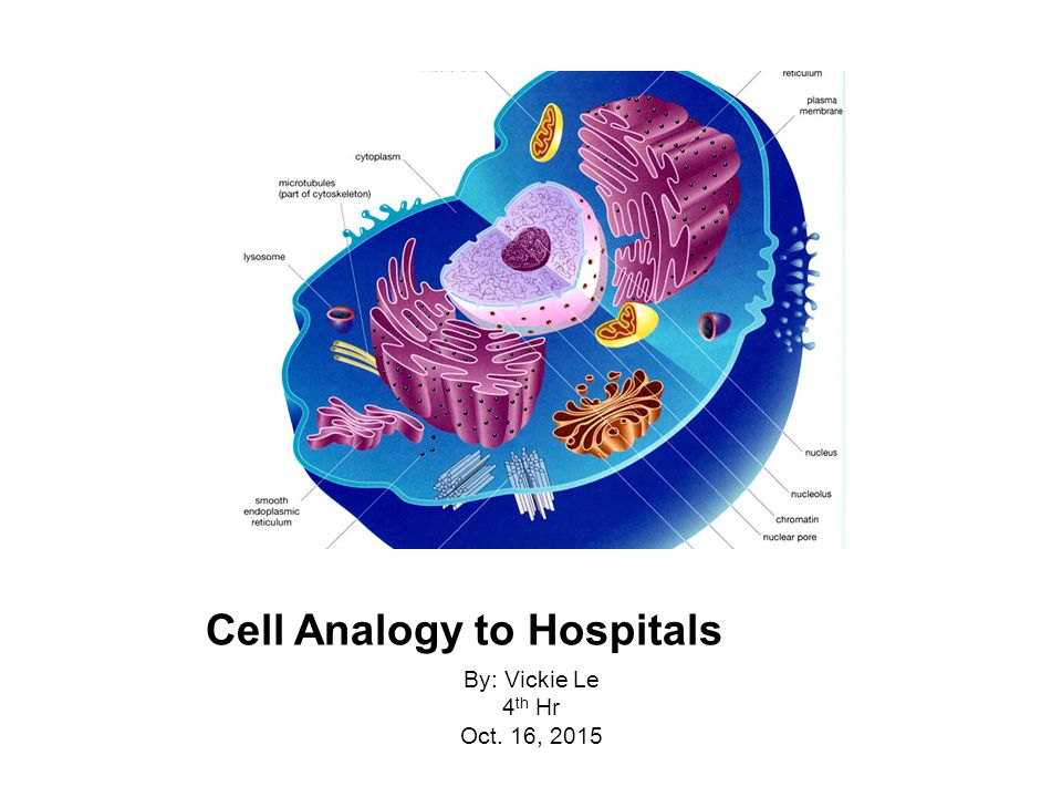 cell analogy to hospitals