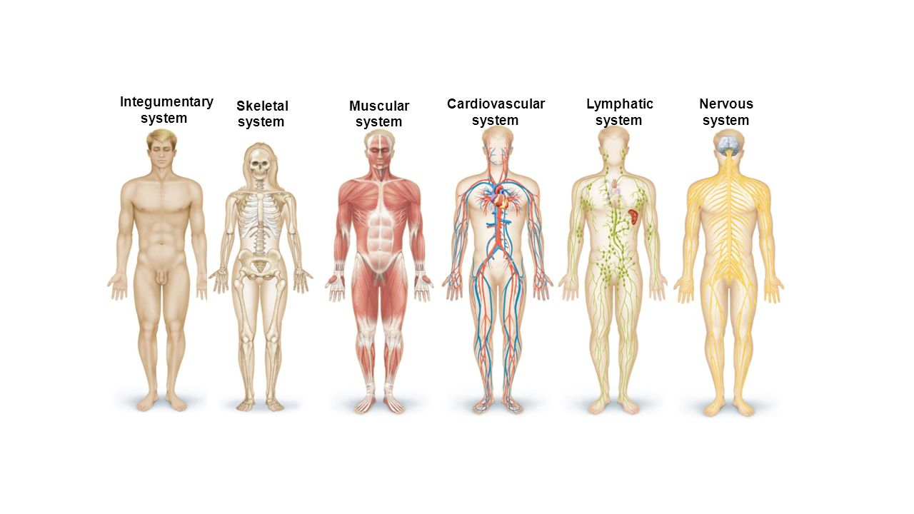 Matching anatomy integumentary system 6989043 - follow4more.info
