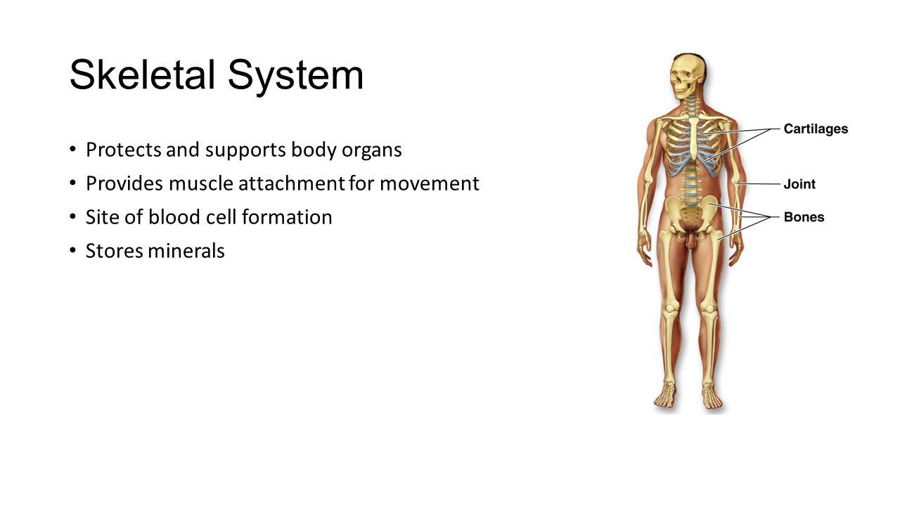 Anatomy Amp Physiology Unit 1 Introduction Ppt Video