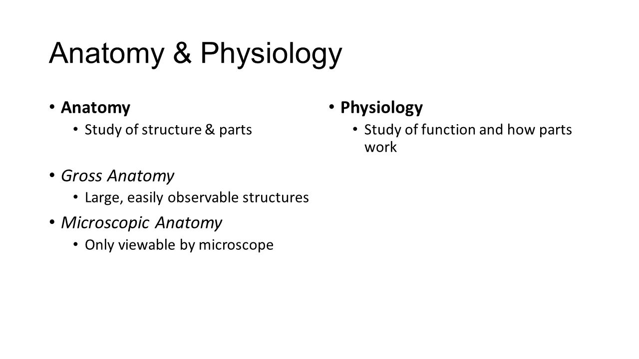 anatomy phys intro All biology course syllabi must be submitted by the first day of classes and will be posted to  intro to biology lab  anatomy & physiology lab: spring.