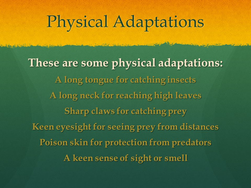 animal behavior adaptations to meet basic needs of a man