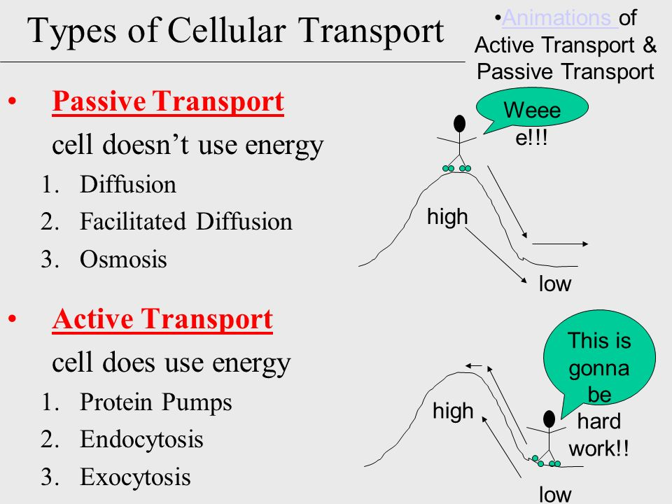 Types Of Active Transport Diagram Complete Wiring Diagrams