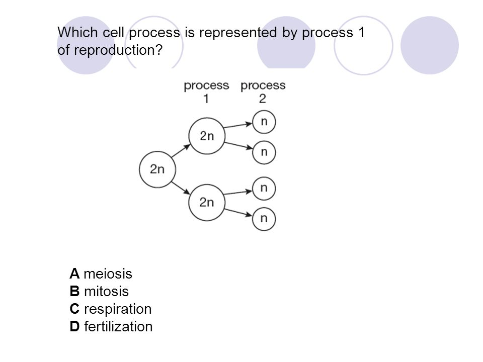 Which cell process is represented by process 1 of reproduction