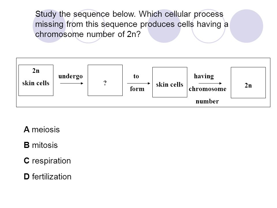 Study the sequence below