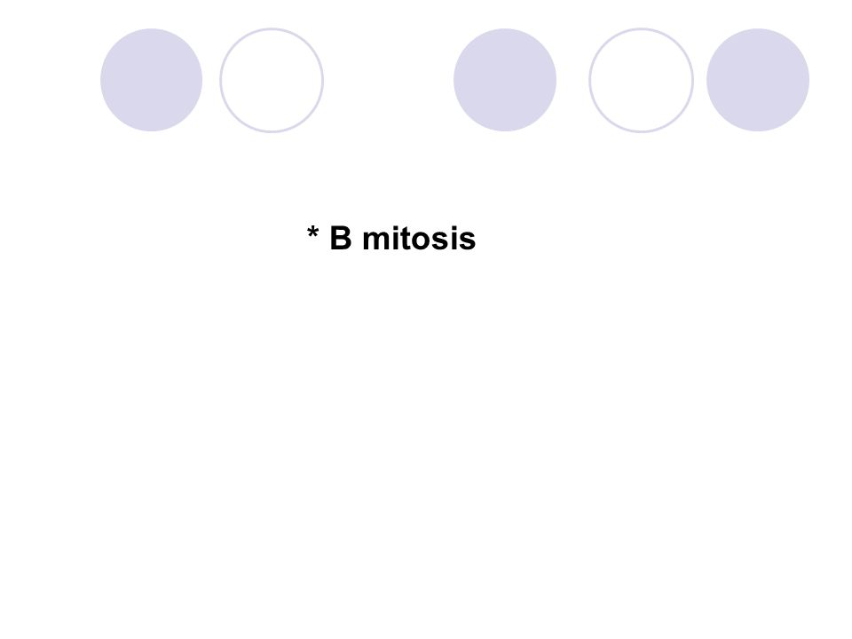 * B mitosis 106