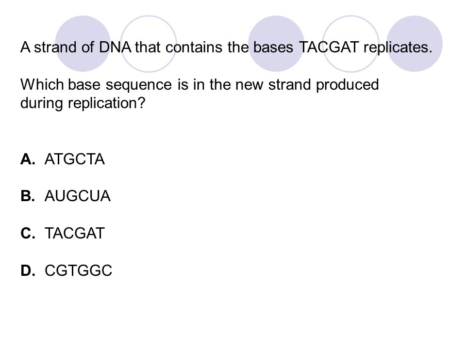 A strand of DNA that contains the bases TACGAT replicates.
