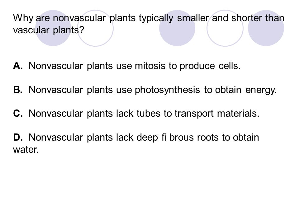 Why are nonvascular plants typically smaller and shorter than vascular plants