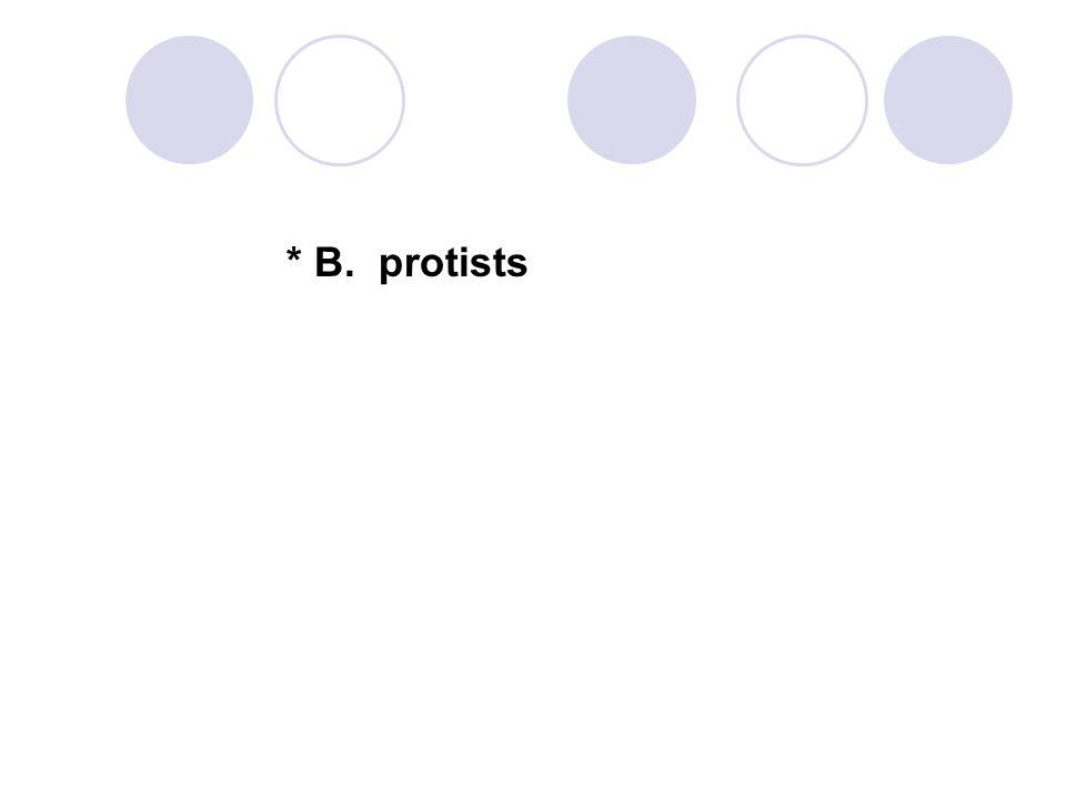 * B. protists
