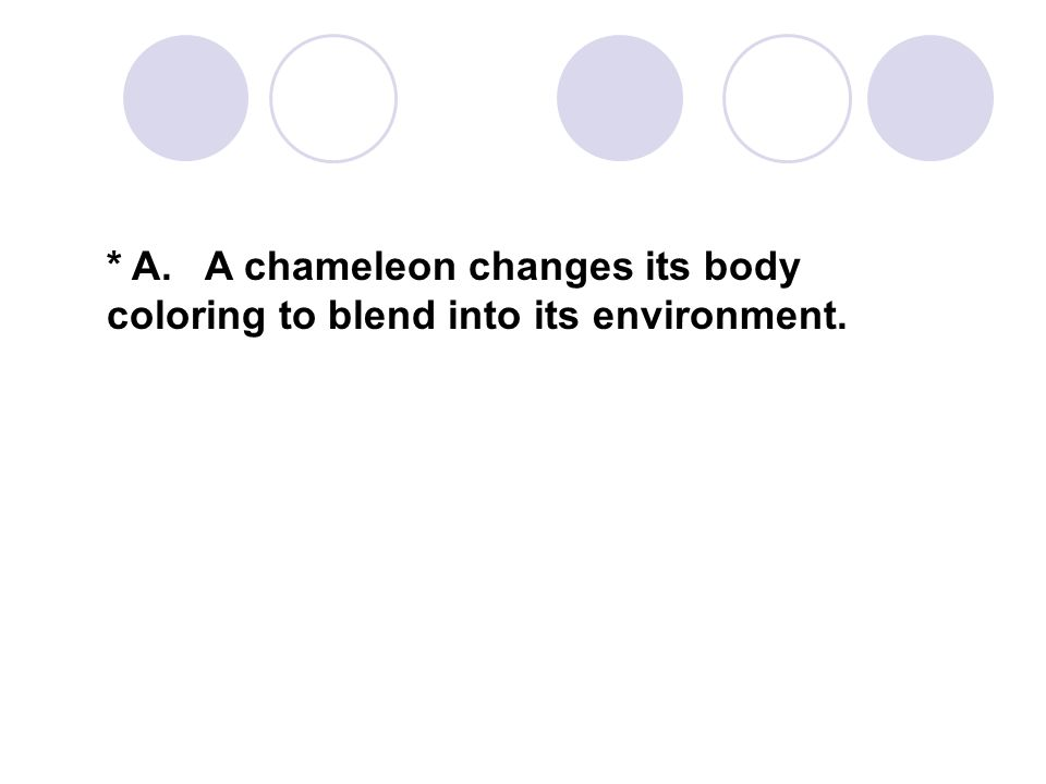 * A. A chameleon changes its body coloring to blend into its environment.