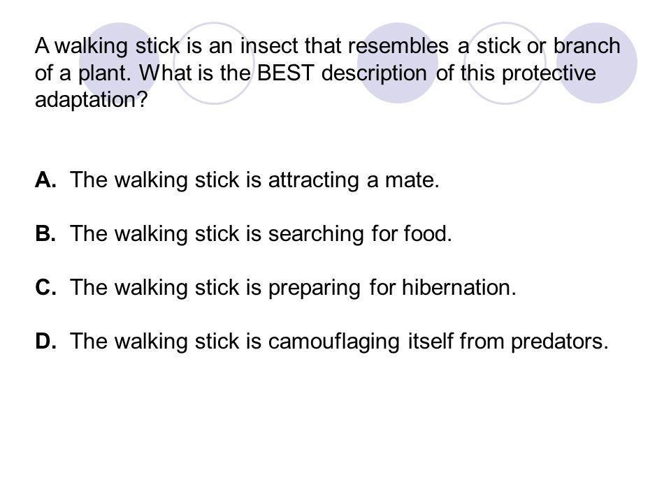 A walking stick is an insect that resembles a stick or branch of a plant. What is the BEST description of this protective adaptation