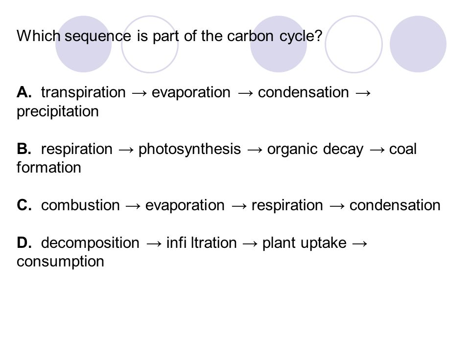 Which sequence is part of the carbon cycle