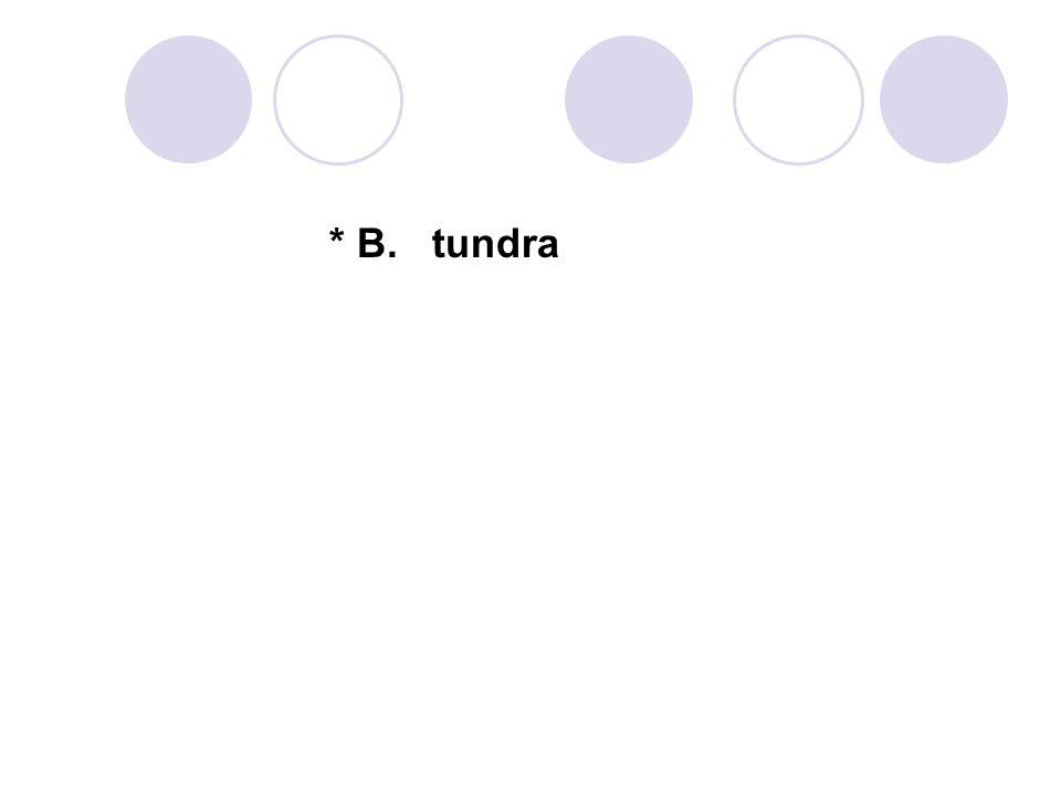 * B. tundra