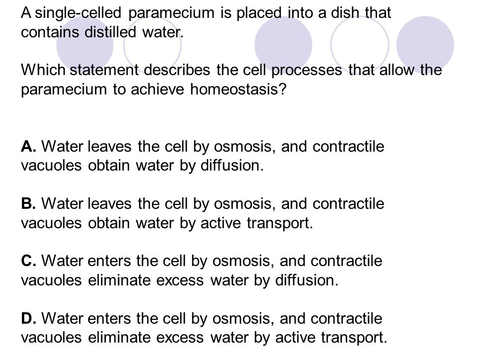A single-celled paramecium is placed into a dish that contains distilled water.