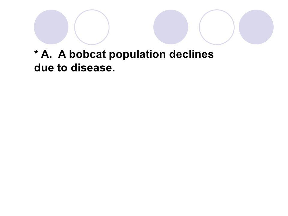 * A. A bobcat population declines