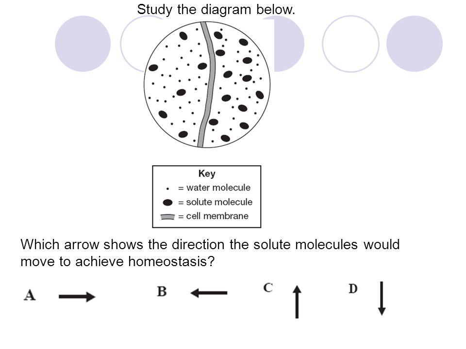 Study the diagram below.