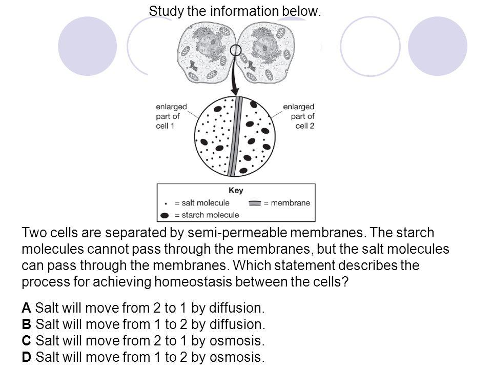 Study the information below.
