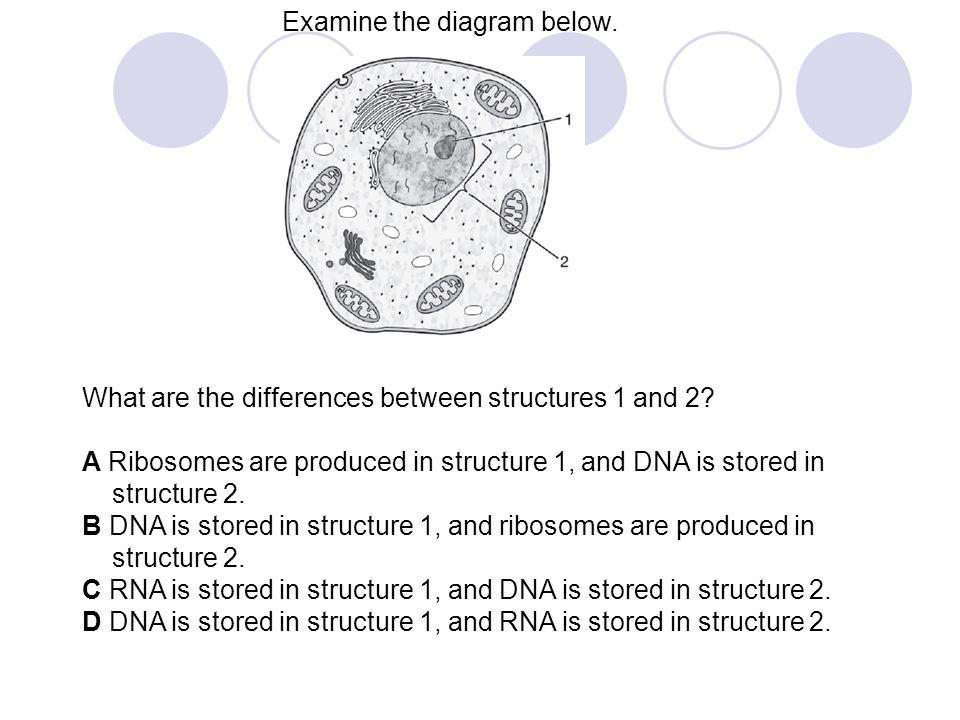 Examine the diagram below.