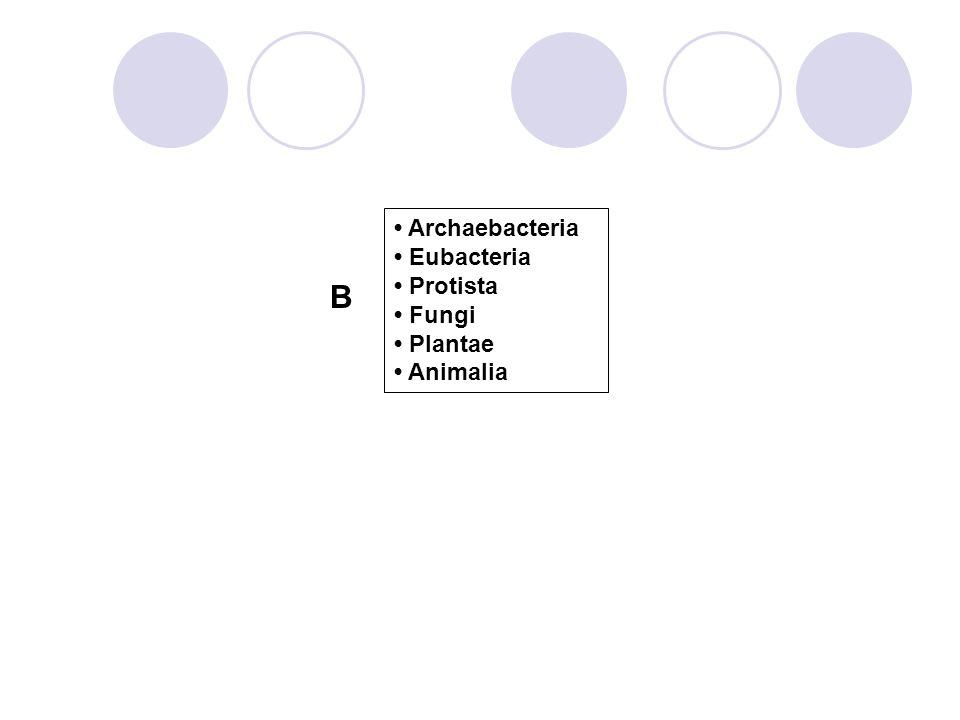 B • Archaebacteria • Eubacteria • Protista • Fungi • Plantae